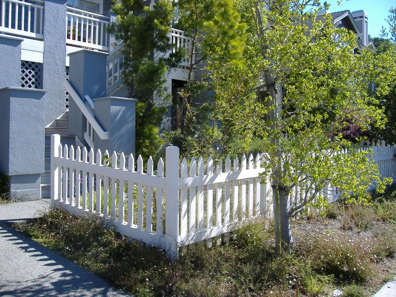 weeds and a picket fence