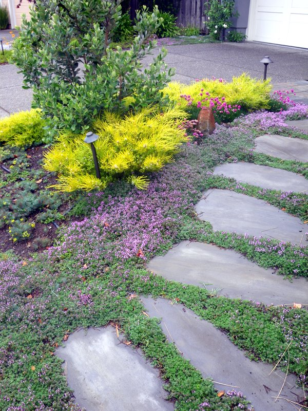 Landscaping With Herbs : Edible landscaping with deer resistant herbs