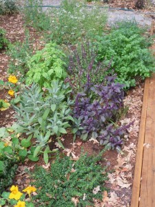 Mixed herbs in the landcape