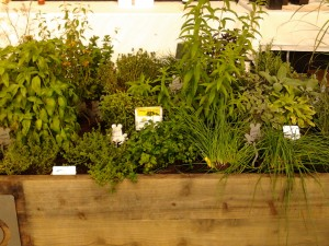 Herbs in box