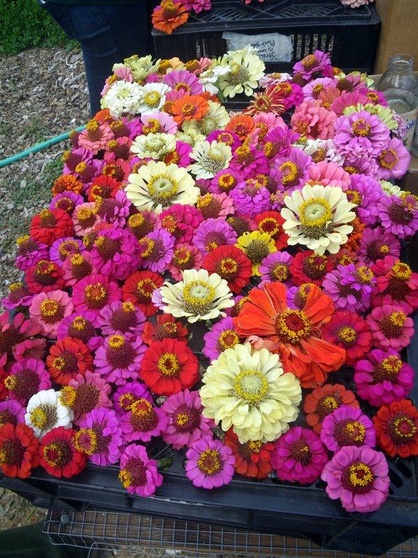 Dried flowers. winter garden, edible landscaping