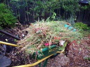 compost, weeds, winter preparation, edible landscape