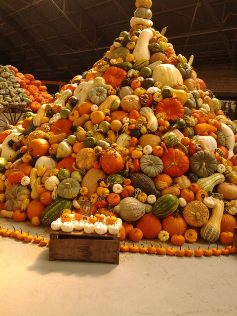 A whole pile of pumpkins, gourds and squash