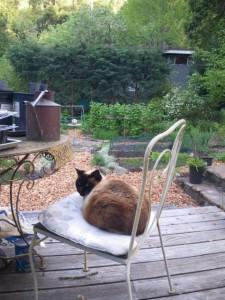 Seemingly innocent cat