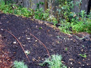 Preparing the soil for cover crops