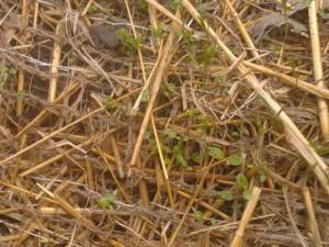 Erosion control seed mix