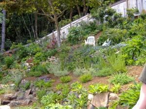 Plants cover concrete wall