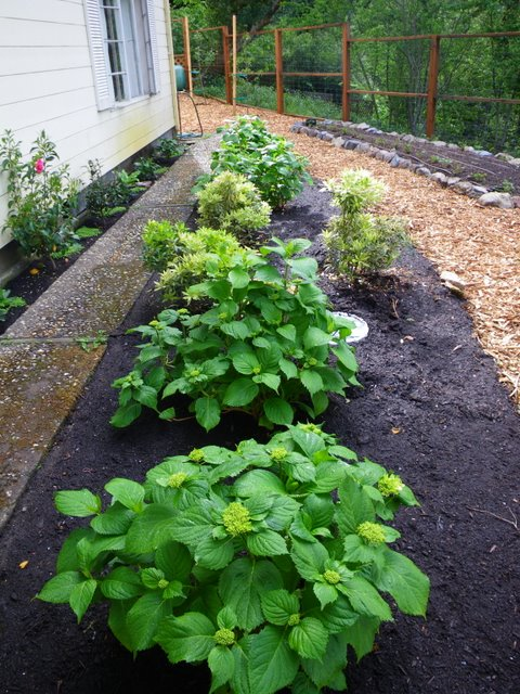 Landscaping On North Side Of House : Edible landscape plan for a small front garden landscaping