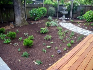 A mixed herb and ornamental garden