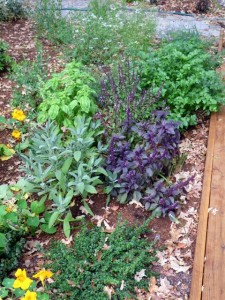 Salvia, basil, parsley and thyme