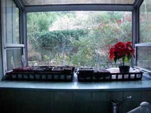 Kitchen window provides sun