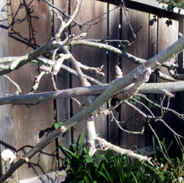 Crossing branches need to be pruned out