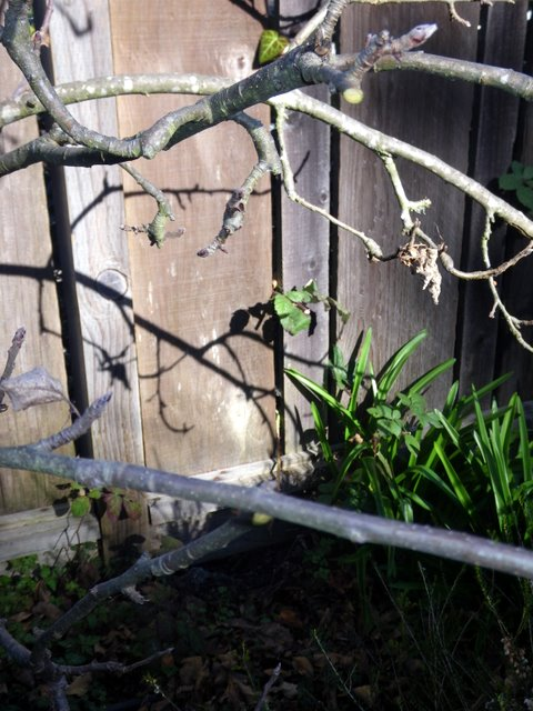 Prune out the crossing branches