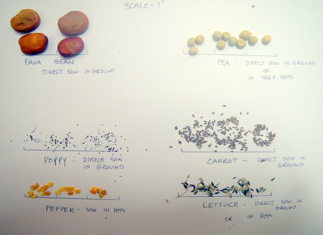 Size matters in sowing seeds