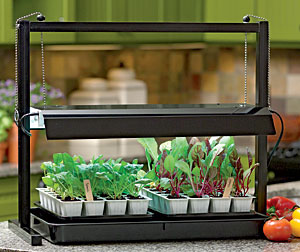 Help your seeds with grow lights