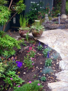 New plantings in the spring garden