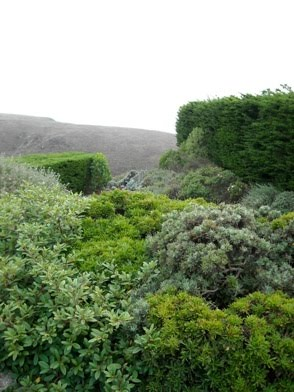 Windbreaks are important for your own comfort as well as your plants