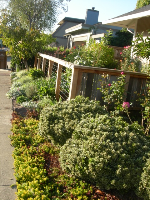 edible front yard | Edible Landscaping Made Easy With Avis Licht