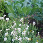 April in the Edible Garden- Planting a Theme Garden
