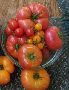 Delicious homegrown tomatoes