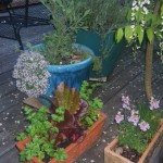Container Planting for the Edible Landscape