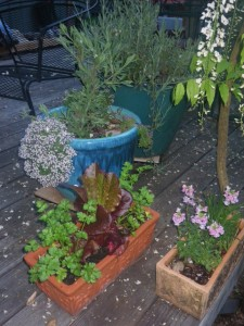 Ornamental containers can grow herbs and food.