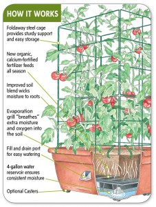 tomato in self watering container
