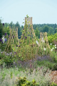 Expandable and lovely willow trellis