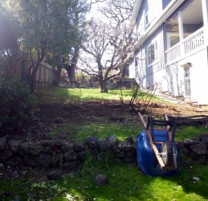 Fence and old shrubs removed