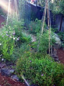 June in the Northern California Garden