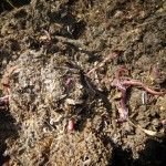 Worms - A Great Investment for your Edible Landscape!