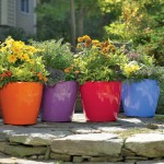 rolling self watering planters