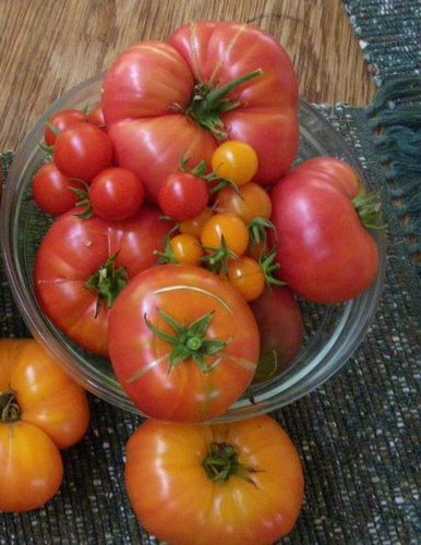 Many colors and kinds of tomatoes