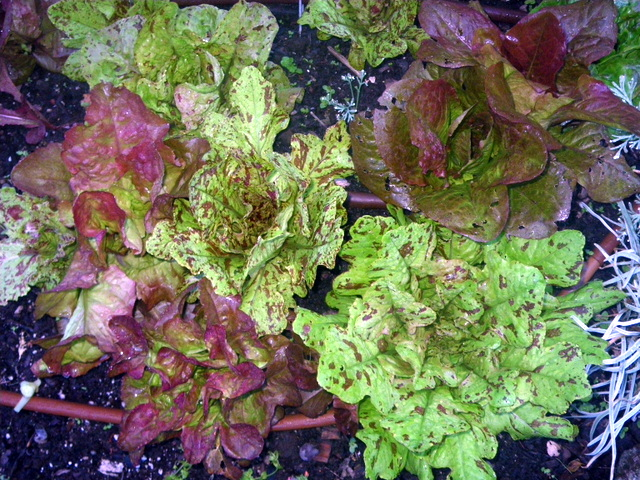 Gardening questions edible landscaping made easy with for Gardening questionnaire