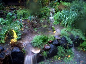 Runoff in the garden