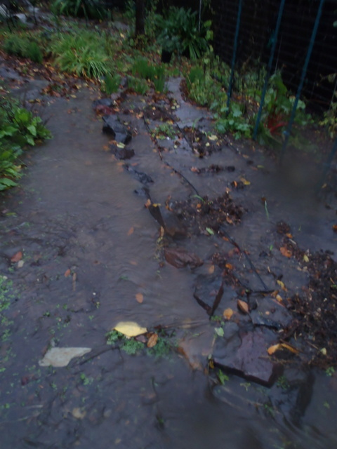 Flooded garden bed