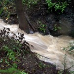 Winter creek during major rain