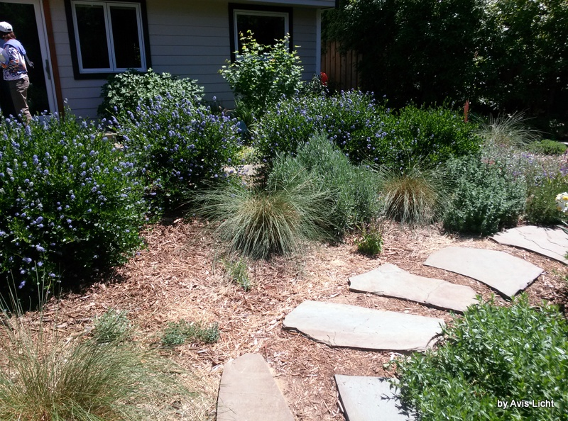 California native plants - Edible Landscapes Take Many Forms Edible Landscaping Made Easy
