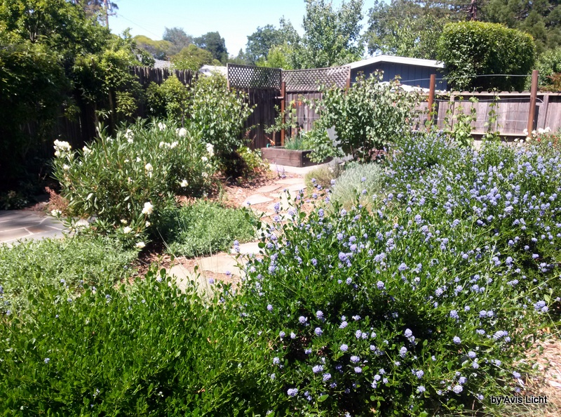 Landscaping With Native Plants : Another view of the same yard this shows that native plants