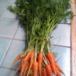 Carrots, Royal Chantenay