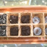 Seed sowing medium